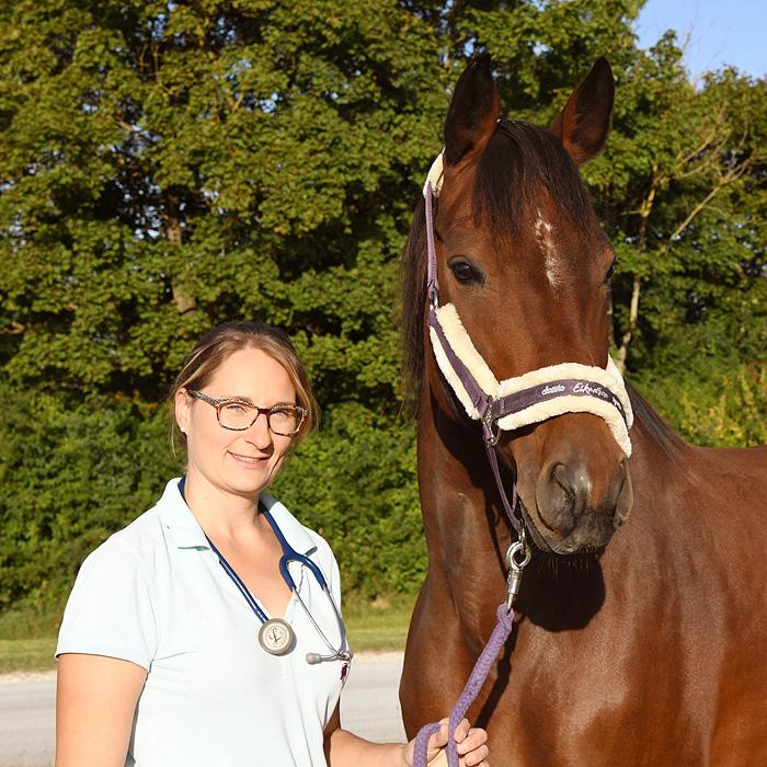 Mobile Pferdepraxis Dr. Kira Stahnke